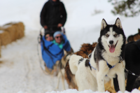 Winterhawk Dogsled Adventures in Leadville, CO