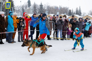 ski joring dog pulls child on skis in snow while audience watches